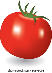 Vector illustration of the tomato on a white