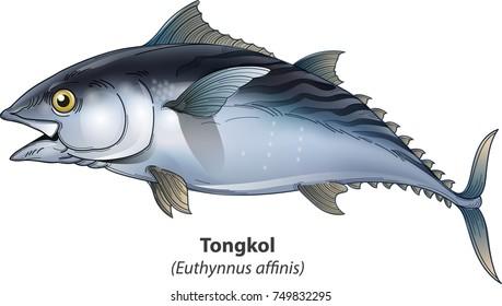 Get Gambar Ikan Tongkol Png
