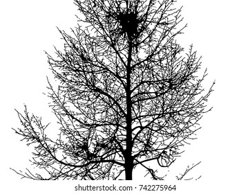 Vector illustration tree with details