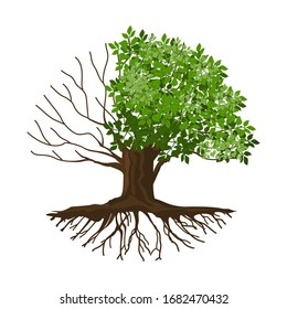Vector illustration of a tree with half-dead and withered roots, molt tree, drought tree vector