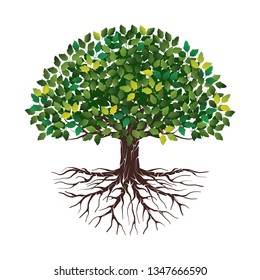Vector illustration of a tree shape with roots and green leaves