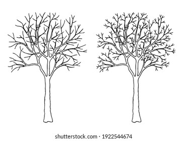 Vector illustration with tree without leaves isolated on white background. Deciduous  tree in winter, early spring or late autumn. Editable element for your design. Vector set.