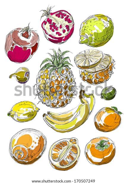 Vector illustration of tropical fruit set