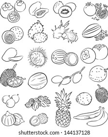 Vector illustration of tropical fruits