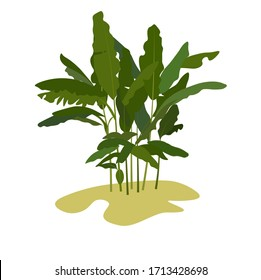 Vector illustration of tropical leave. Palm tree banana. Summer vacation, travel to tropical countries. Sandy beach. Beach on the island. Coconut tree with wide leaves. Isolated on a white background