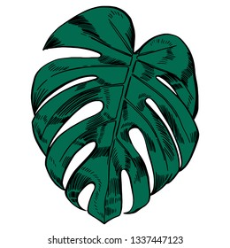 Vector illustration with tropical monstera leaves exotic jungle