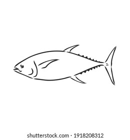 Vector illustration of tuna. Vector illustration can be used for creating logo and emblem for fishing clubs, prints, web and other crafts. tuna fish, vector sketch on white background