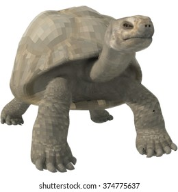 Vector illustration of a turtle on a white background