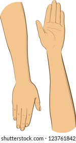 vector illustration two arms with hands
