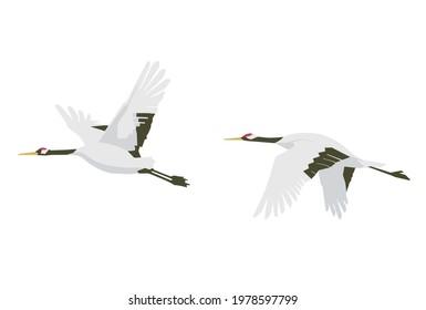 Vector illustration of two cranes in flight