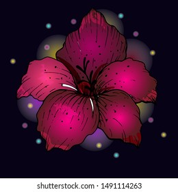 Vector illustration. Ugibiscus flower drawing in black lines. The flower is painted with gradient fills in pink and purple with an internal and external glow. Element for creating your own design.