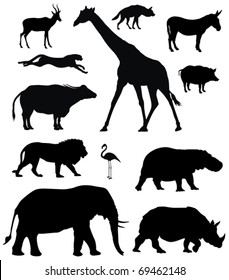 Vector illustration of various african animals