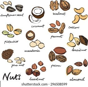 Vector illustration of various nut set