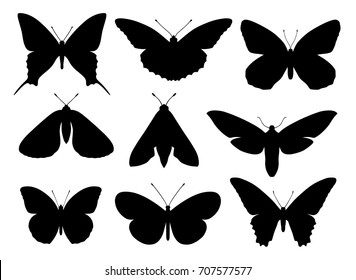 Vector illustration of various types of butterflies silhouettes