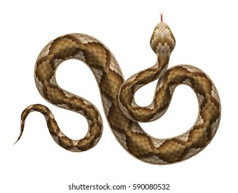 Vector illustration of viper snake isolated on white background.