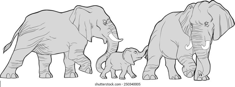 Vector illustration of a walking elephant family, the small one in the middle.