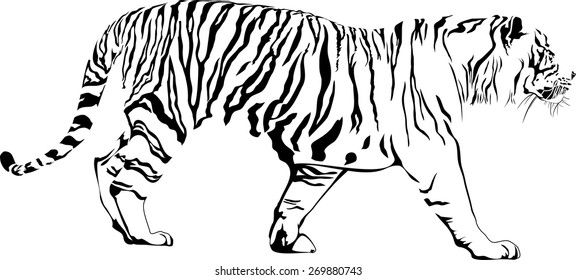 Vector illustration of walking tiger. Abstract solated on white background
