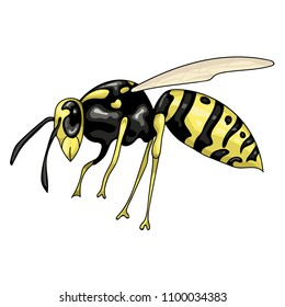 vector illustration with wasp on a white background isolated