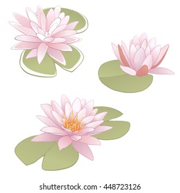 Vector illustration of water lily (Nymphaeaceae).