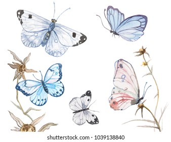 Vector illustration of watercolor butterflies isolated on white background