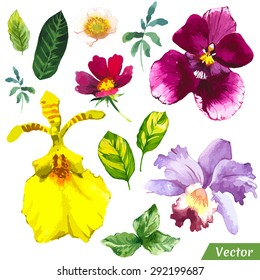 Vector illustration with watercolor flowers. Painting set of different orchid avd leaves.