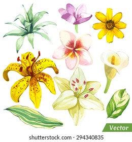 Vector illustration with watercolor plants. Painting white and yellow set of flowers with calla lily, plumeria and leaves.