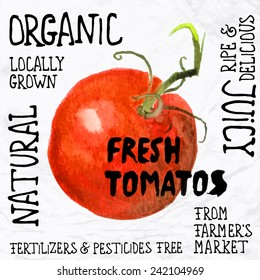 Vector illustration of watercolor tomato, hand drawn in in 1950s or 1960s style. Concept for farmers market, organic food, natural product design, juice, sauce, ketchup, etc.