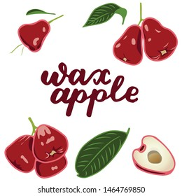 vector illustration of wax apple and leaf design isolated with lettering wax apple background white and fruit EPS10