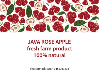 vector illustration of wax apple and leaf design background white and fruit and text java rose apple fresh farm product 100% natural EPS10