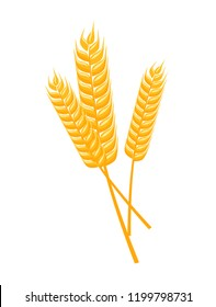 Vector illustration of wheat spikelets isolated on white background. Template, print, design element. Cartoon style.