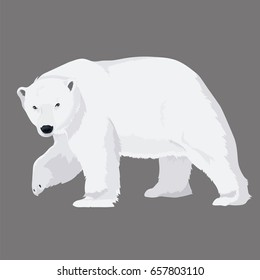 Vector Illustration White Bear