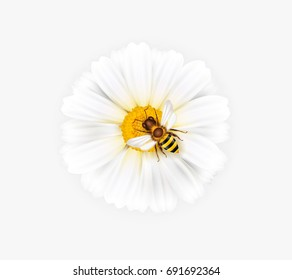 Vector illustration of a white chamomile with a bee on a white background. Ready object for your banner, flyer, infographics, poster. Vector chamomile flower with an insect.