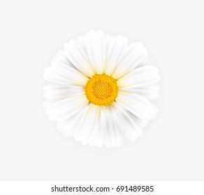 Vector illustration of a white chamomile. Ready object for your banner, flyer, infographics, poster, website, logo.  Beautiful vector chamomile flower on a white background.
