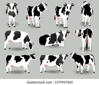 Vector Illustration. White cows with black spots in various poses on a gray background.