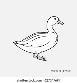 Vector illustration: white duck Simple icon. Flat design. Drawings for children, coloring pages
