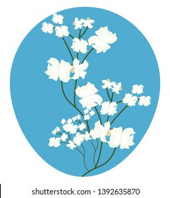 Vector illustration of white gypsophilia  flowers on white background.