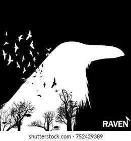 Vector illustration of the white raven head silhouette with the fluttering wings on a black background Double exposure effect.