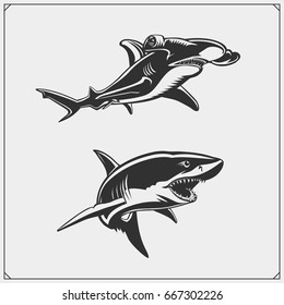 Vector illustration of White shark and Hammerhead shark.