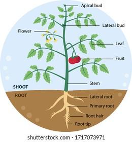 """""""plant Part"""" Images, Stock Photos & Vectors   Shutterstock"""