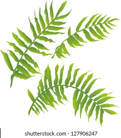 vector illustration of wild fern leaves