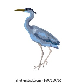 Vector illustration of wild gray heron stands isolated on white background