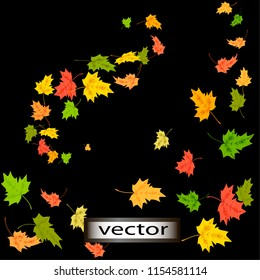 Vector illustration, wind blowing falling maple leaves red and yellow twist, set for autumn design .