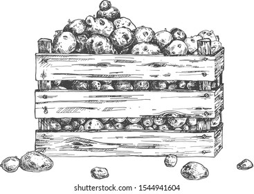 Vector illustration of winter vegetable storage. Wooden crate box with potatoes. Farmers market organic food for sale. Farm eco products. Vintage hand drawn style.