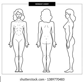 Vector illustration of woman's body. Front, back, side views. Outline girl model template. Anatomical silhouette of the female body. Vector Illustration - Vector.