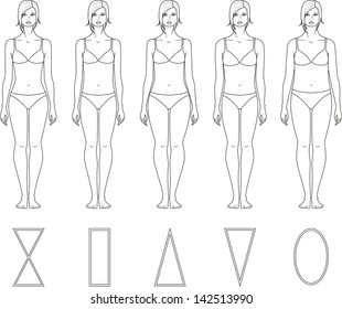 Vector illustration of women's figures. Different body types