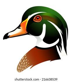 vector illustration of wood duck