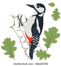 Vector Illustration of Woodpecker. Woodpecker isolated on white background.