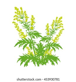 Vector illustration of wormwood plant with flowers