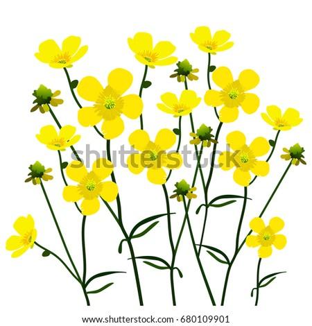 b7e4b2b62d349 Vector illustration of yellow flowers on white background. Element for  design.