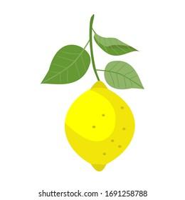 Vector illustration of a yellow lemon vector on a white background. Lemon clip art icon.